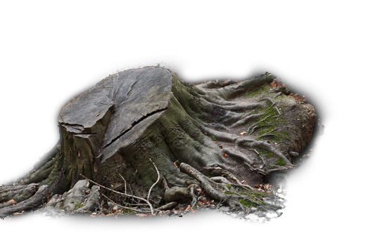 Tree Stump PNG.png
