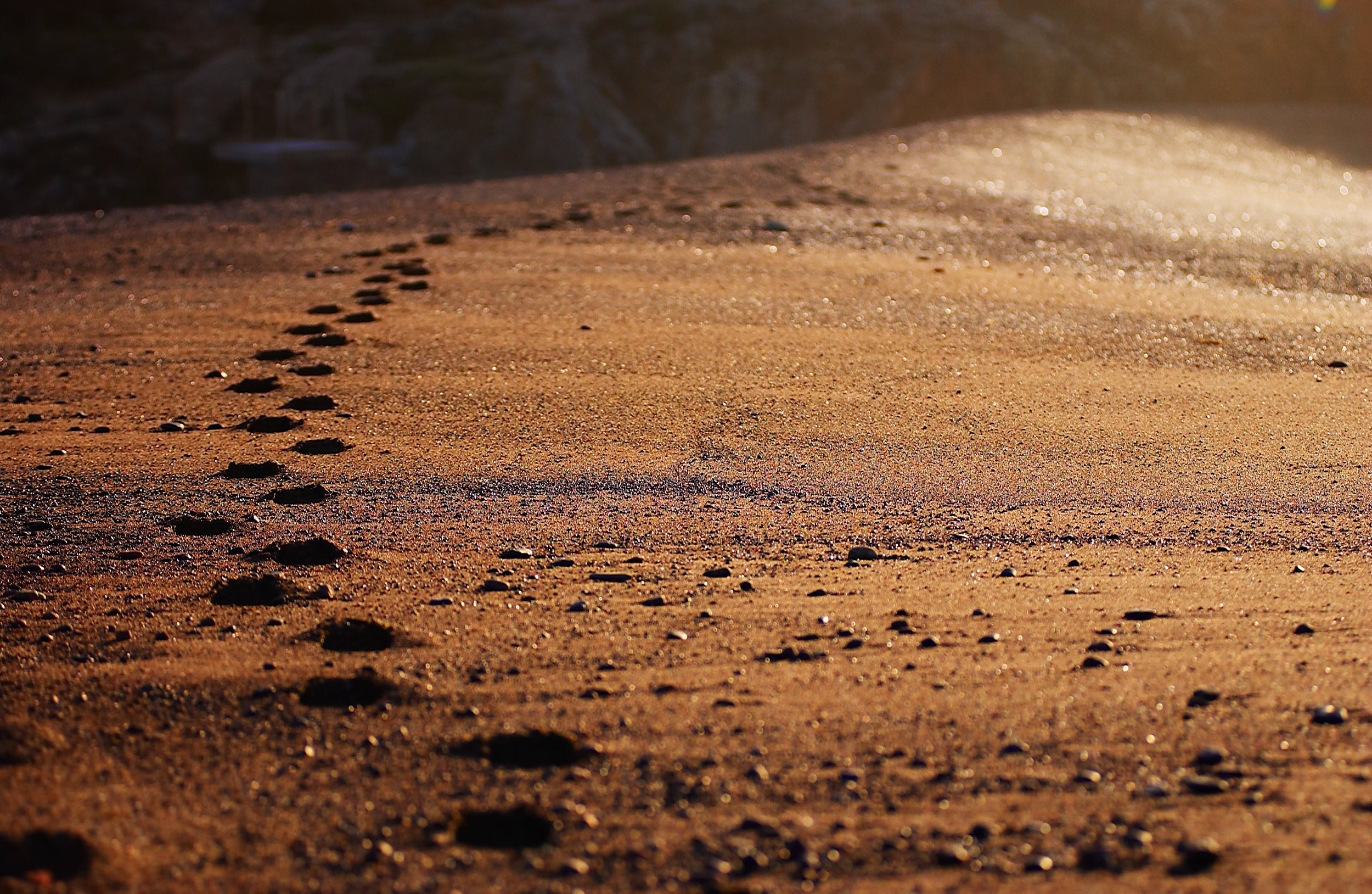 Fodspor i sand.jpg