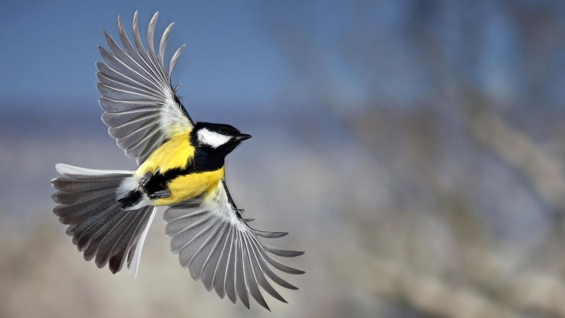 bird-wallpapers-25396-741340.jpg