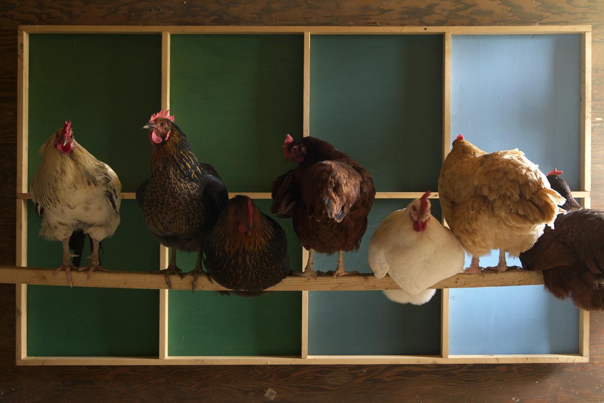 chickengrid.jpg