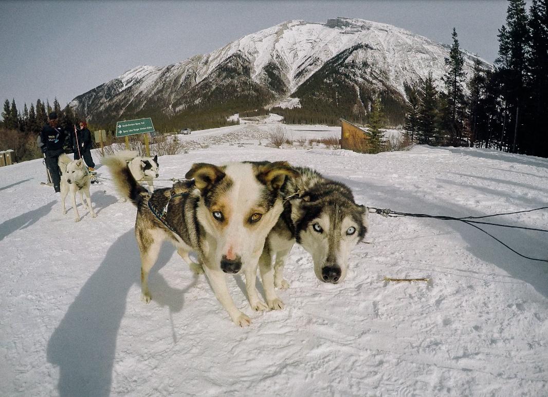 billie norman huskies snow canmore spray lakes