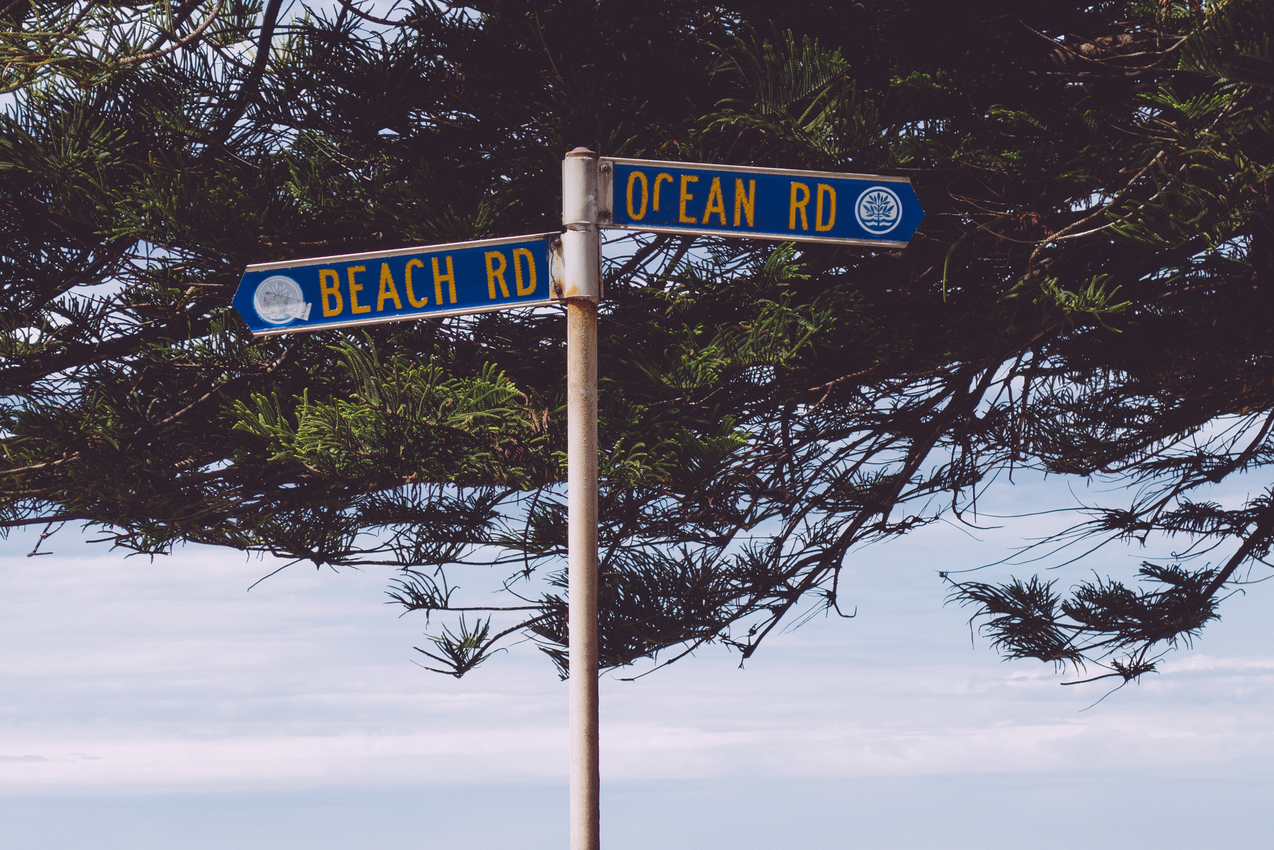 billie norman beach road ocean road northern beaches palm beach sydney