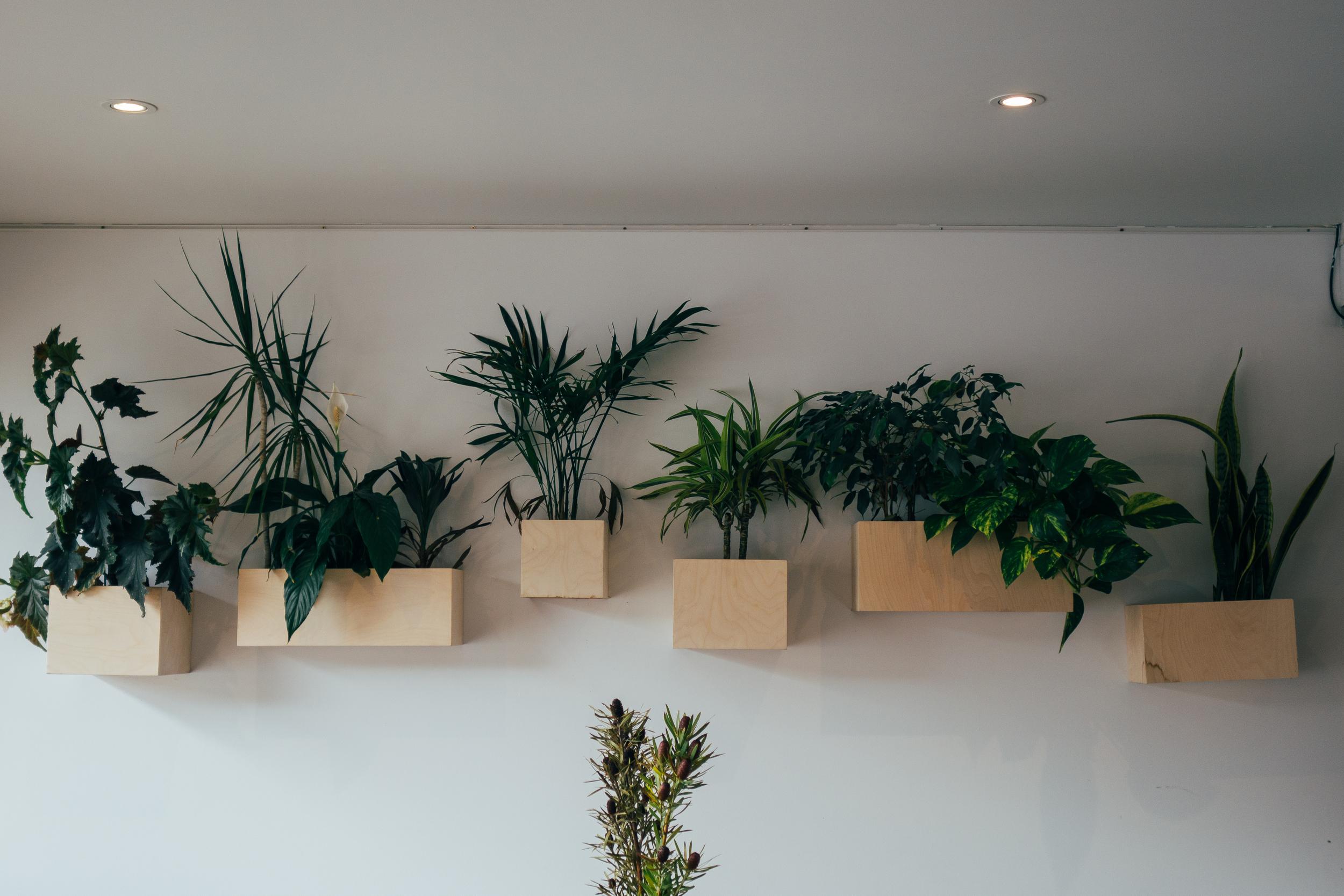 lucy lockett plants