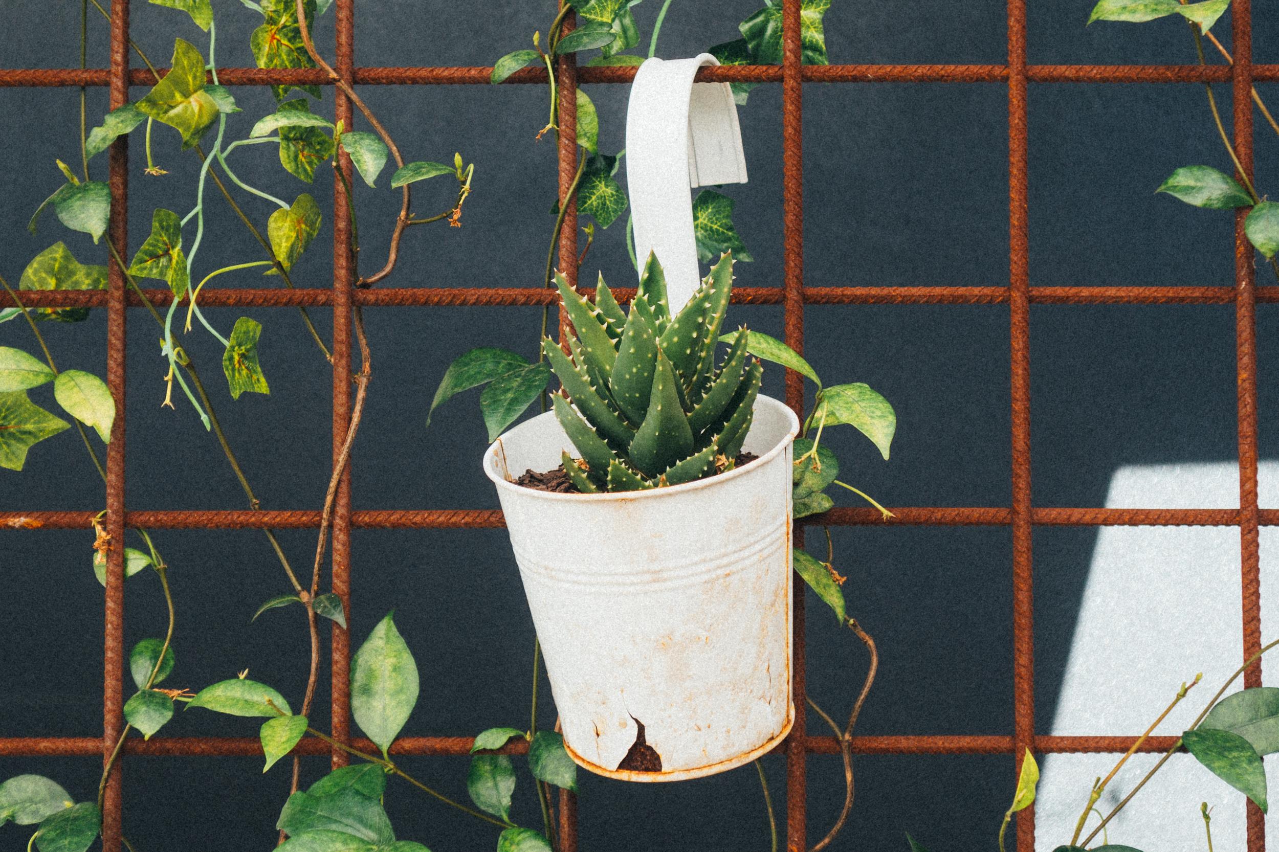 serotonin eatery cactus