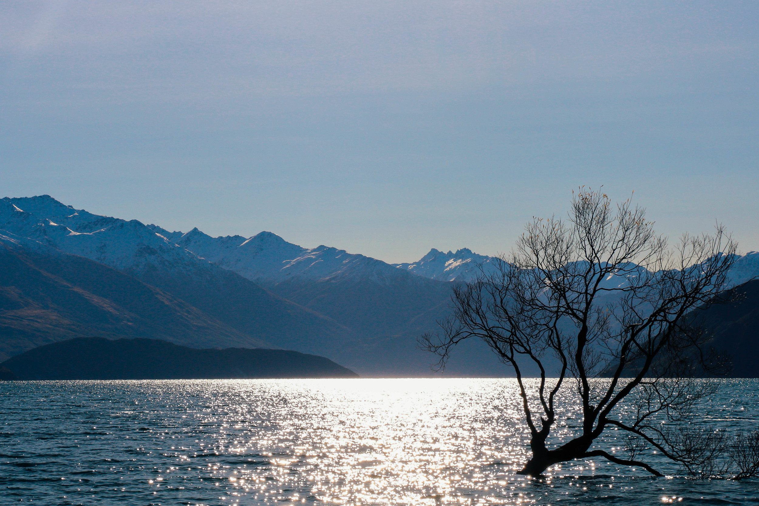 Wanaka Tree New Zealand Voyage Collective Shelby McGill
