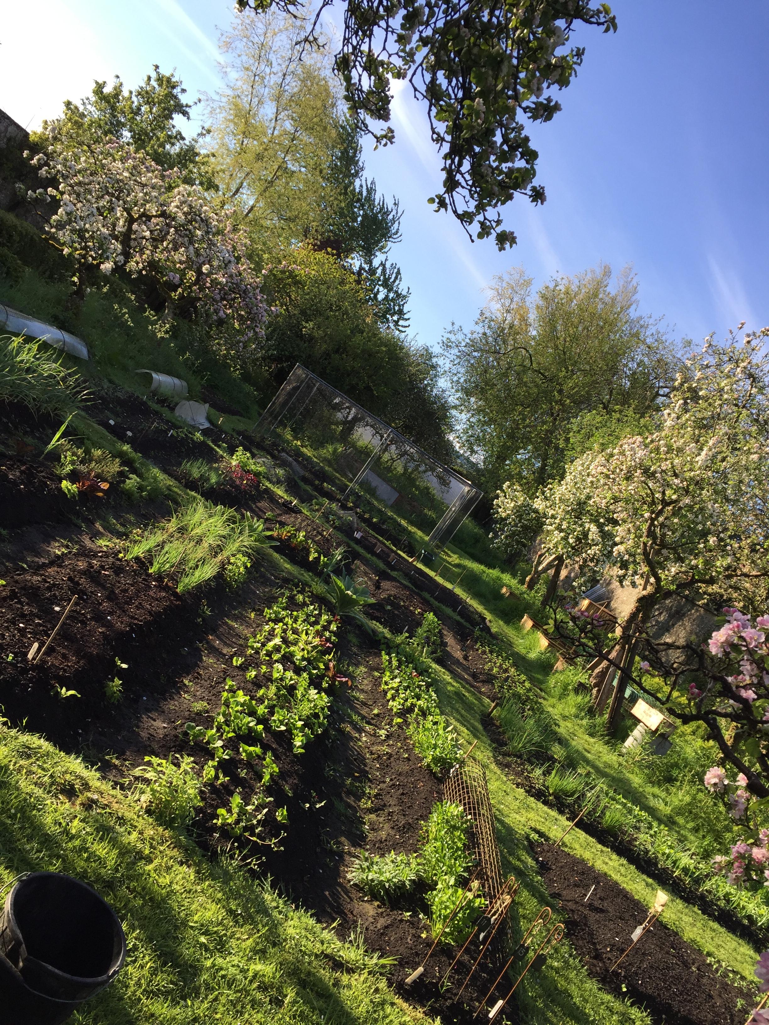 Newton Garden last May