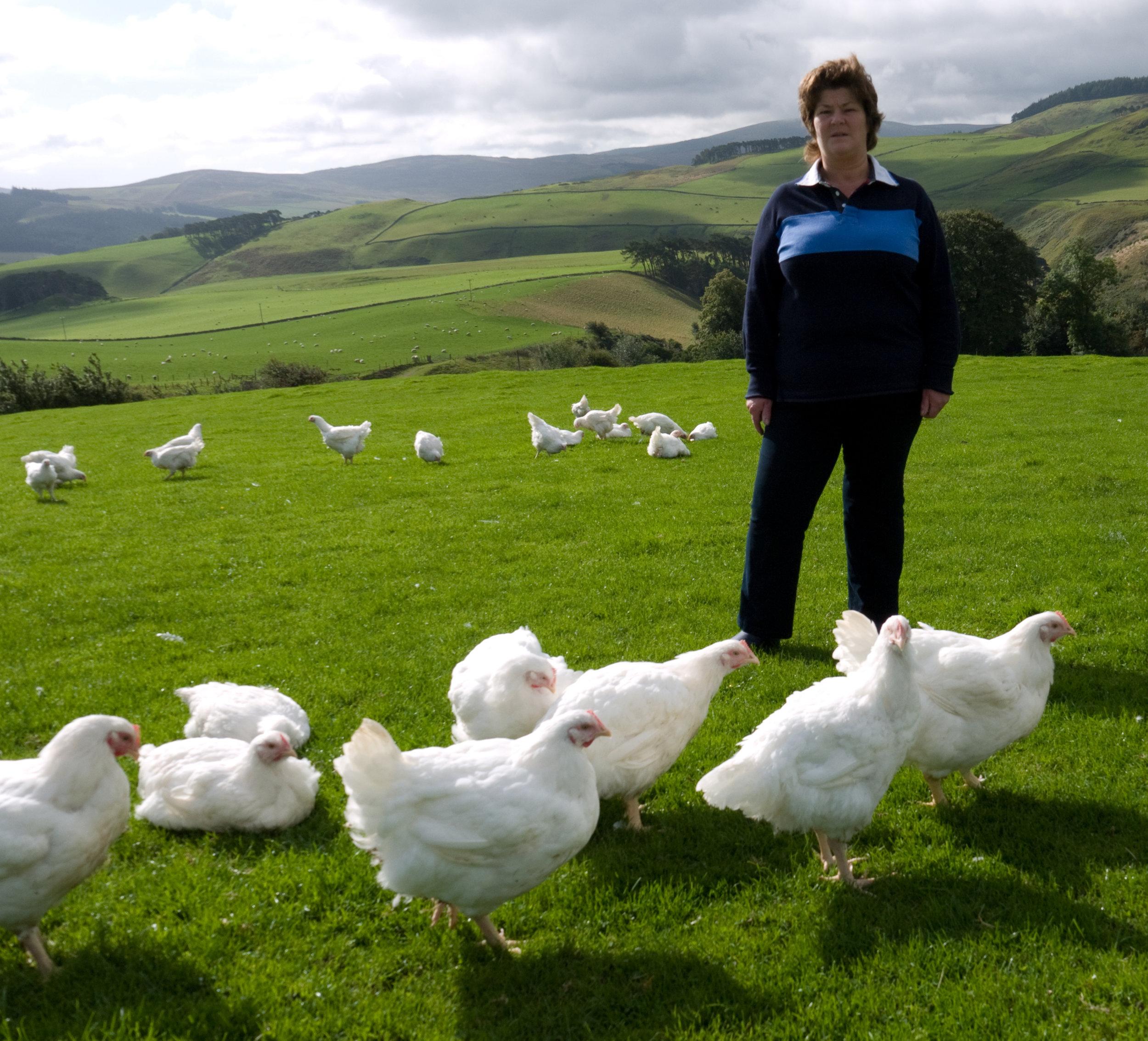 Linda Dick Chickens 2.jpg