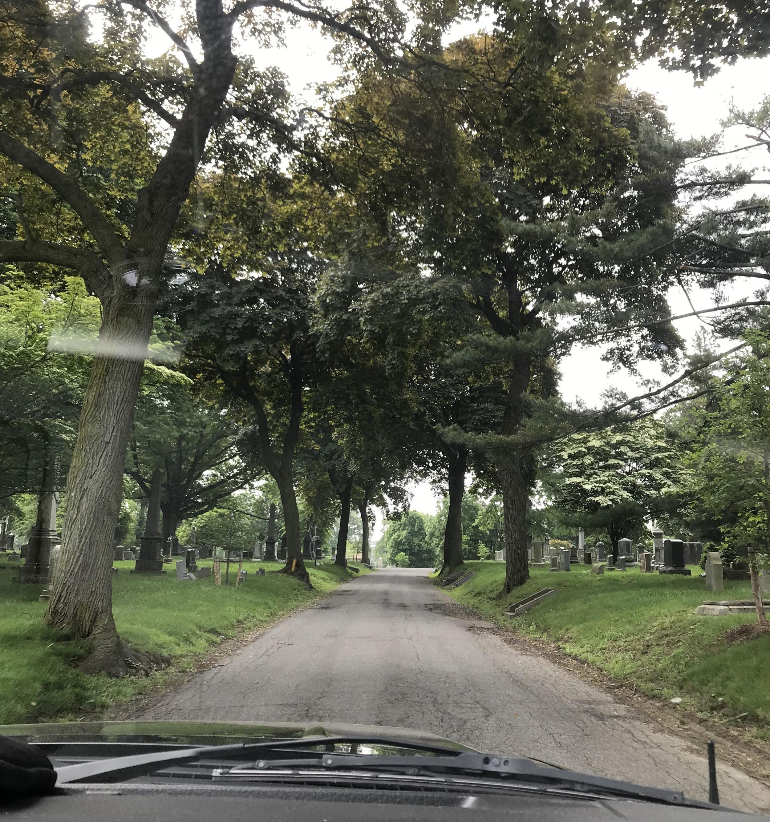 Tree coverage on Vine Street
