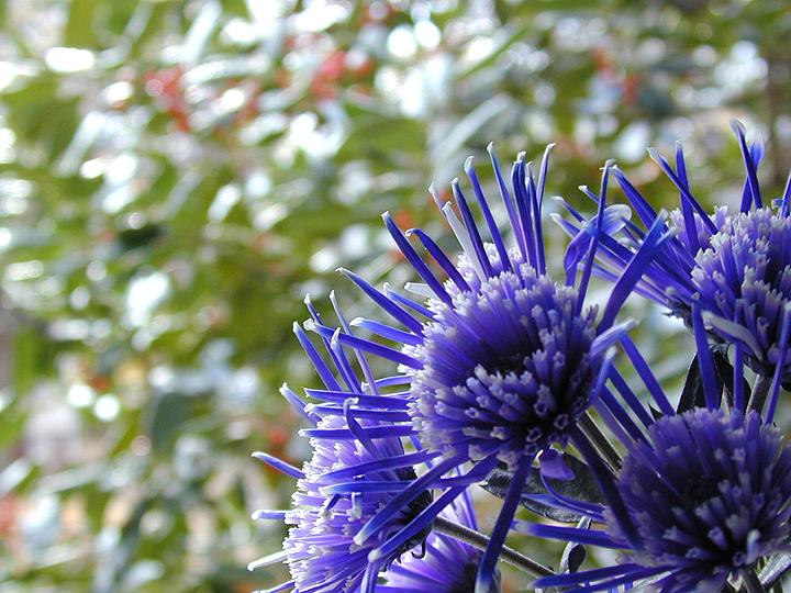 Purple Flowers agai#1D44156.jpg