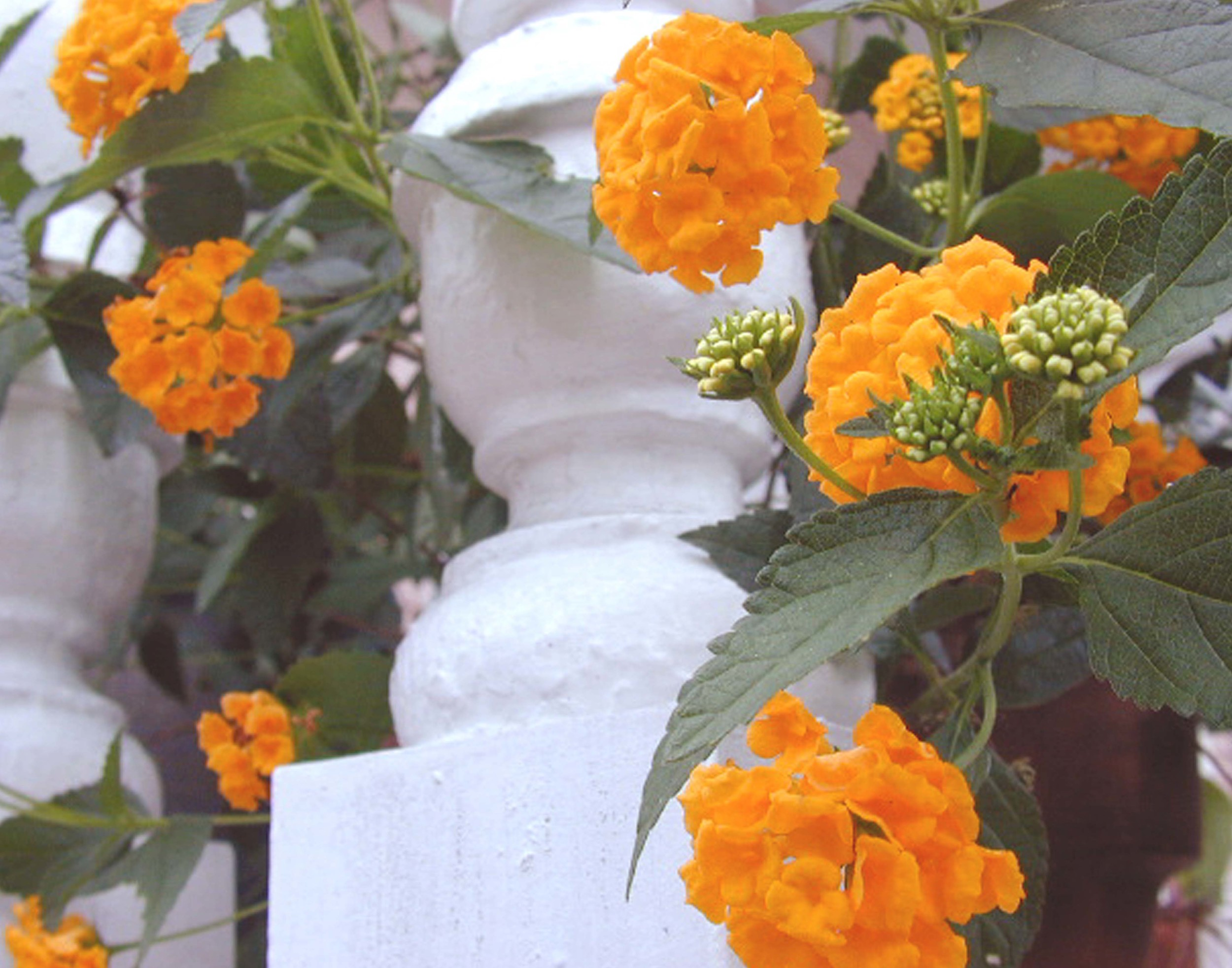 Balstrade Flowers Wall.jpg