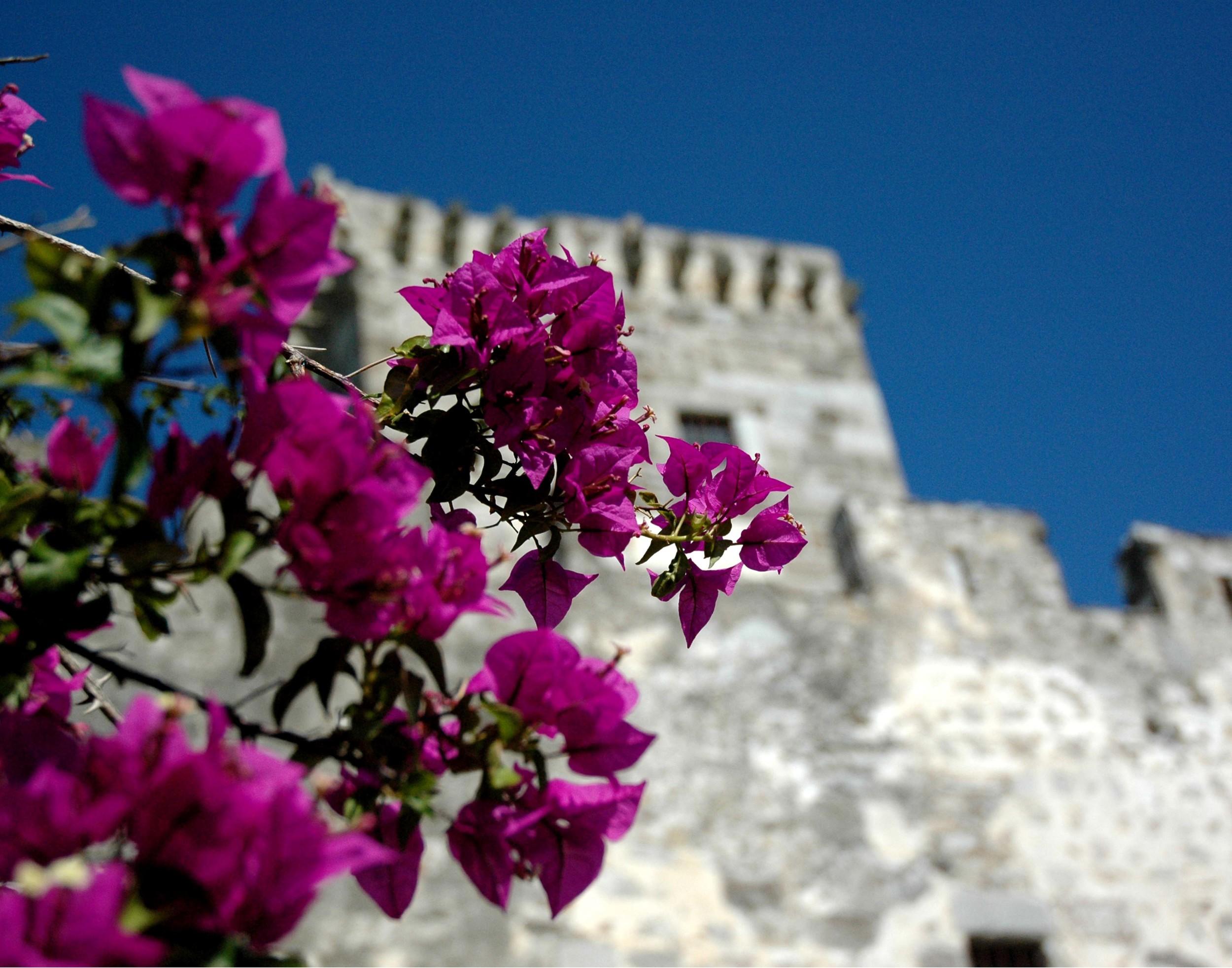 Castle Flowers Wall.jpg