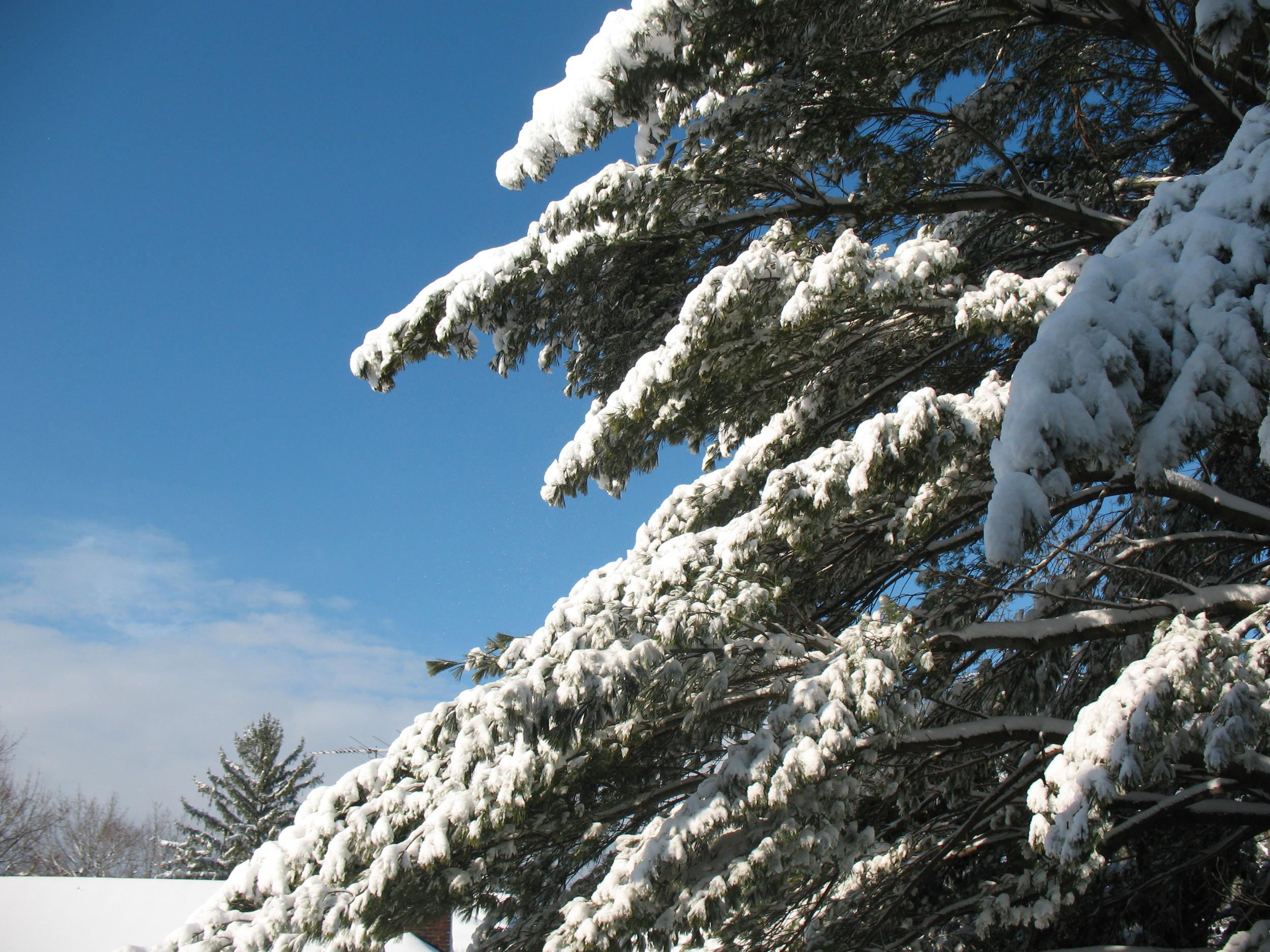 First Snow 2010-03.jpg