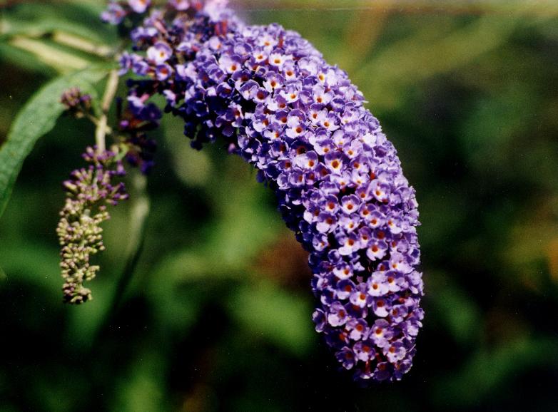 P Flower.jpg