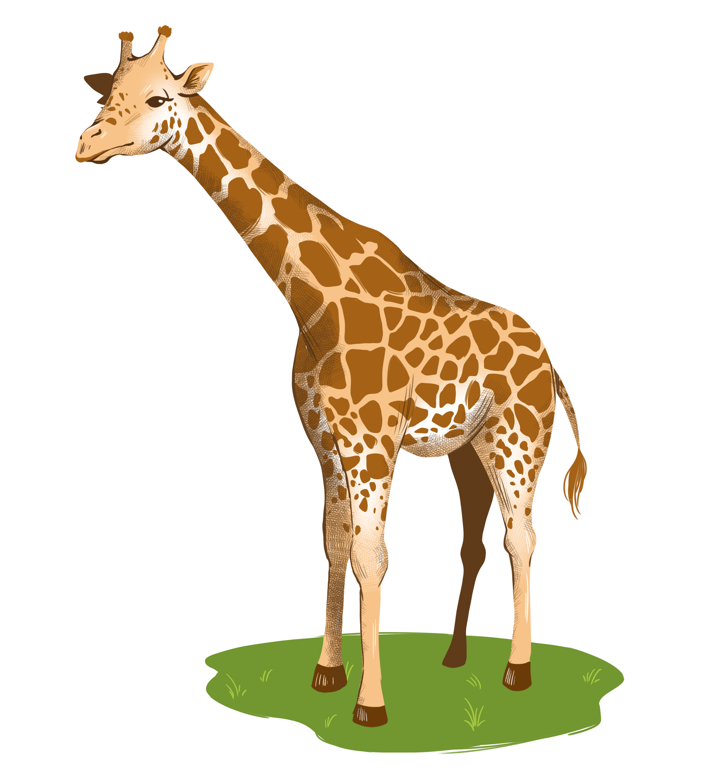 giraffen_feinillu Kopie.jpg