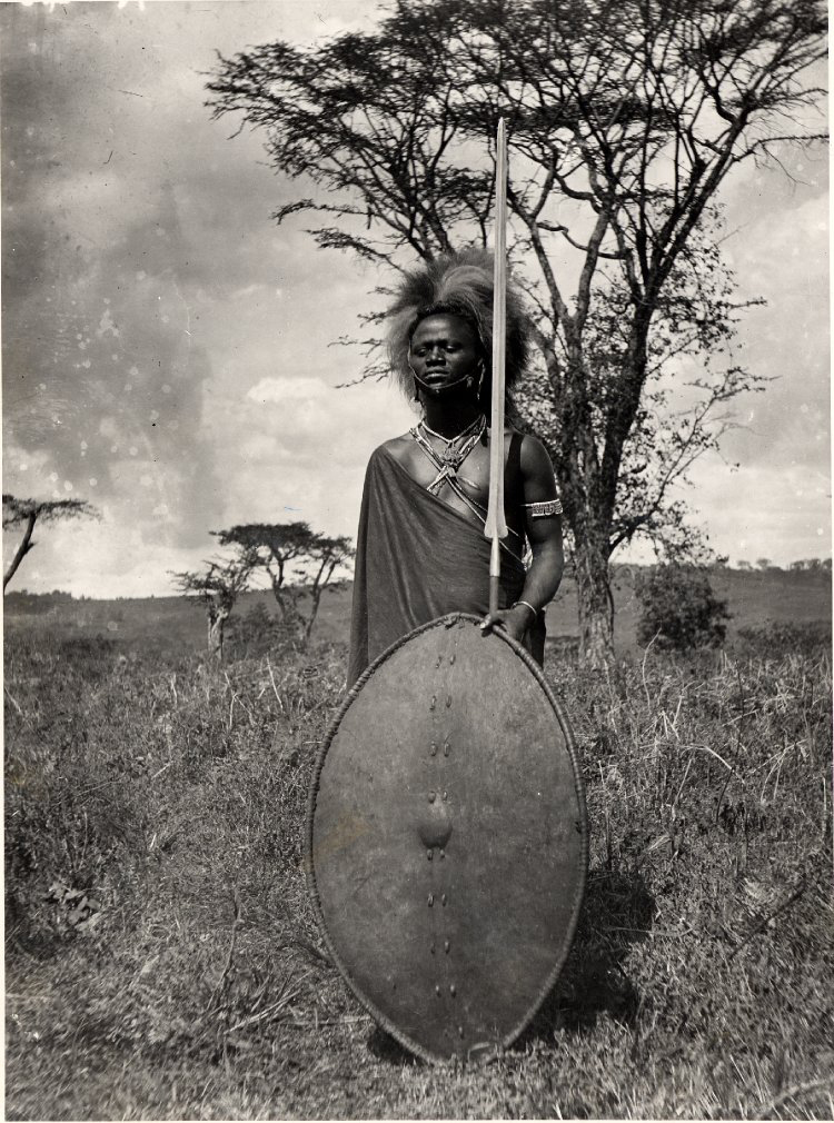 Maasai  moran , or warrior, in a lion-mane headdress with traditional war shield and spear (  British Museum collection, gelatin silver print, 1880-1960 (AN38872001)