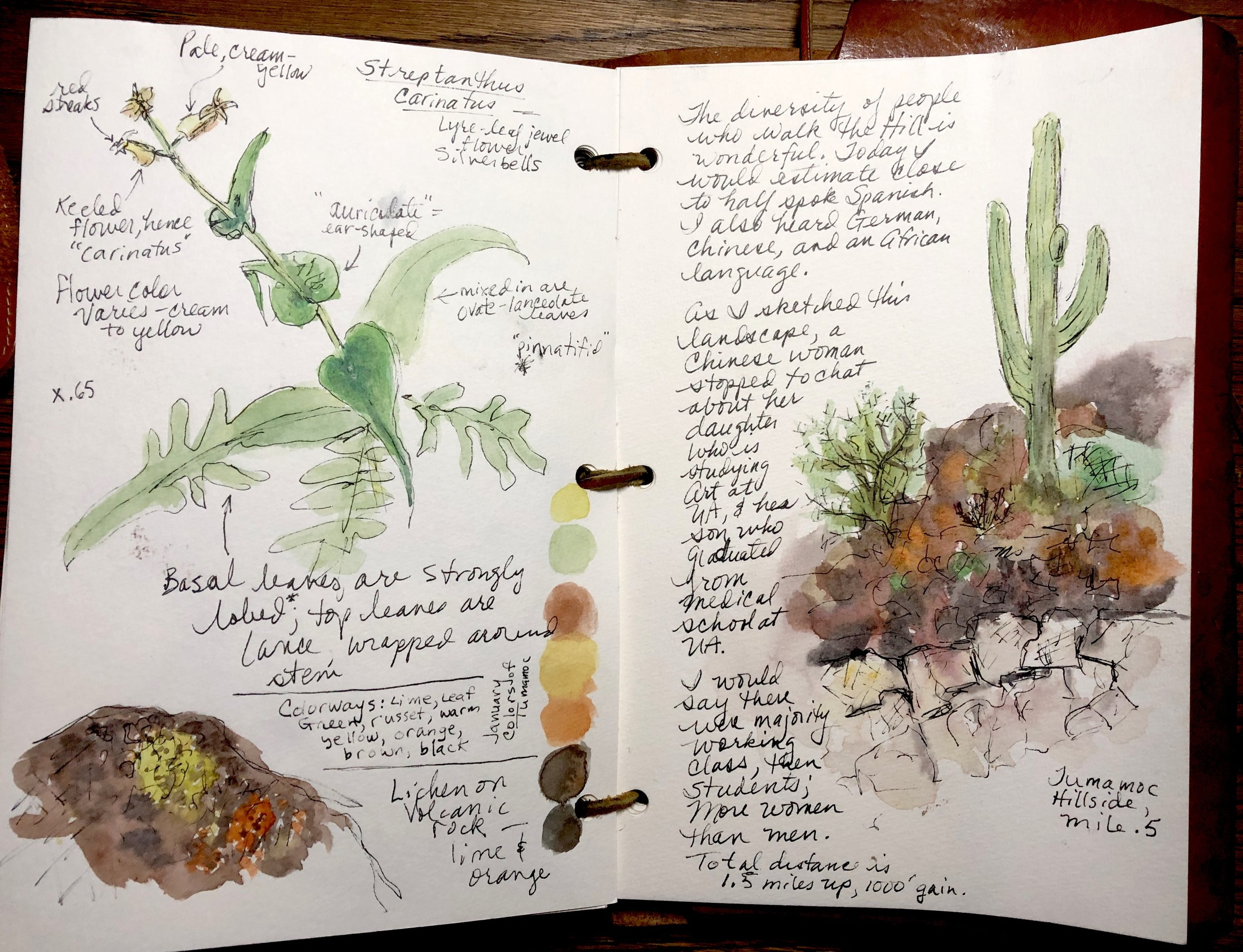 Journal spread done with the mini kit while walking up to the Desert Laboratory on Tumamoc Hill, Tucson, Arizona. The indanthrone blue + burnt sienna + purple ochre create the interest rock colors and textures quickly.