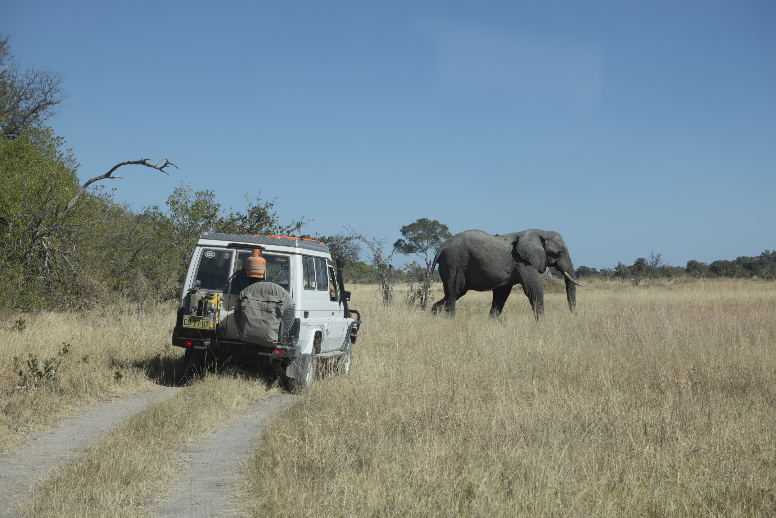 Elephant crossing copy.jpg