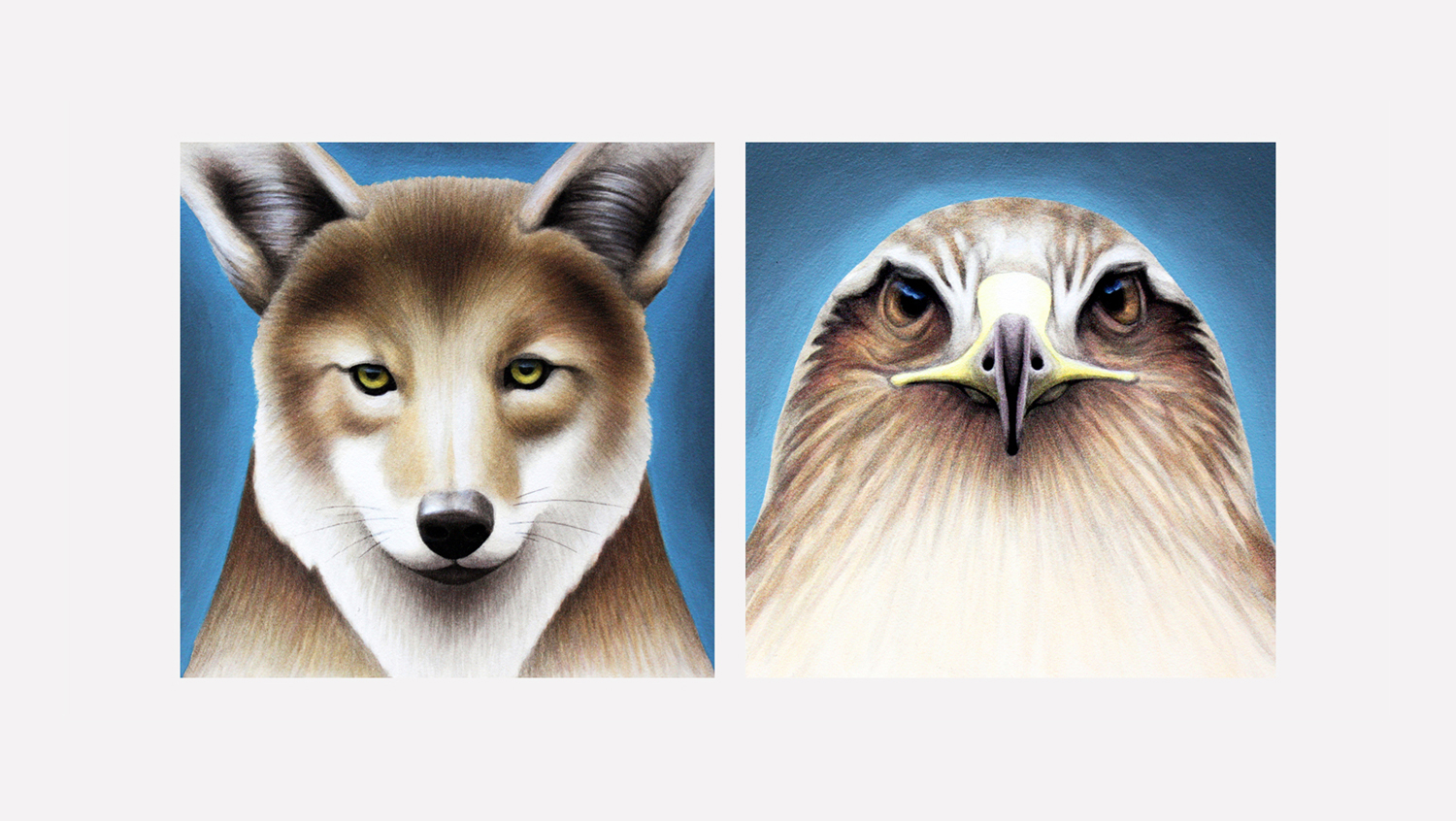 """Coyote. Hawk. (SF Residents series)  acrylic on panel 6x6"""""""