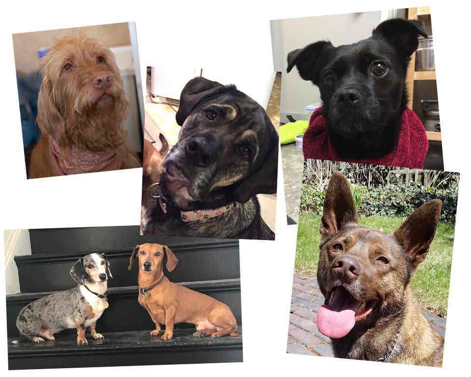 Dog photos!