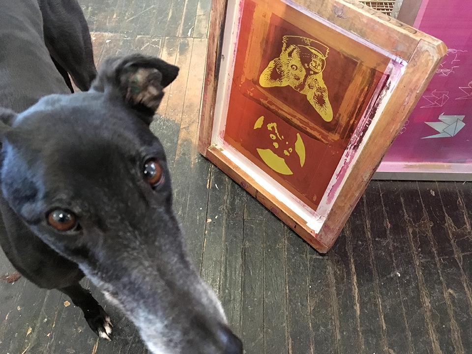 A custom dog portrait screen + my dog Bernadette, who likes to photo-bomb