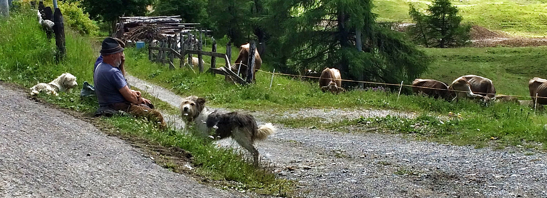 Nothing to do with France at all but a sneaky photo of some Italian cow-herders from the Alps the other day.