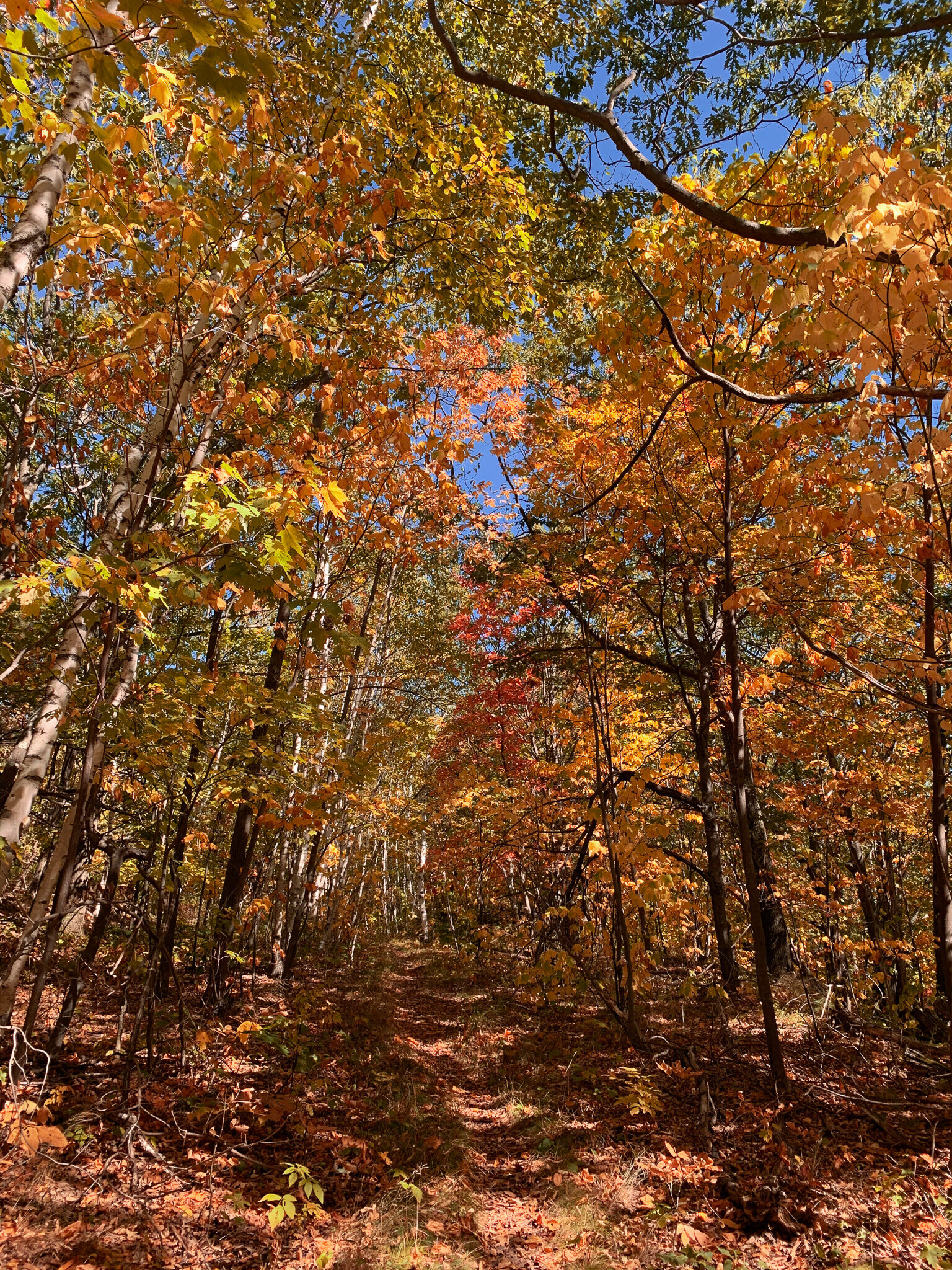 Kaaterskill Wild Forest