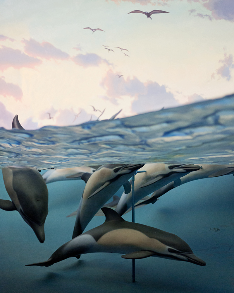 Dolphins, American Museum of Natural History