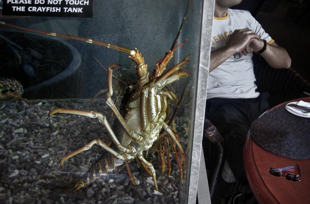78Crayfish-Final.jpg