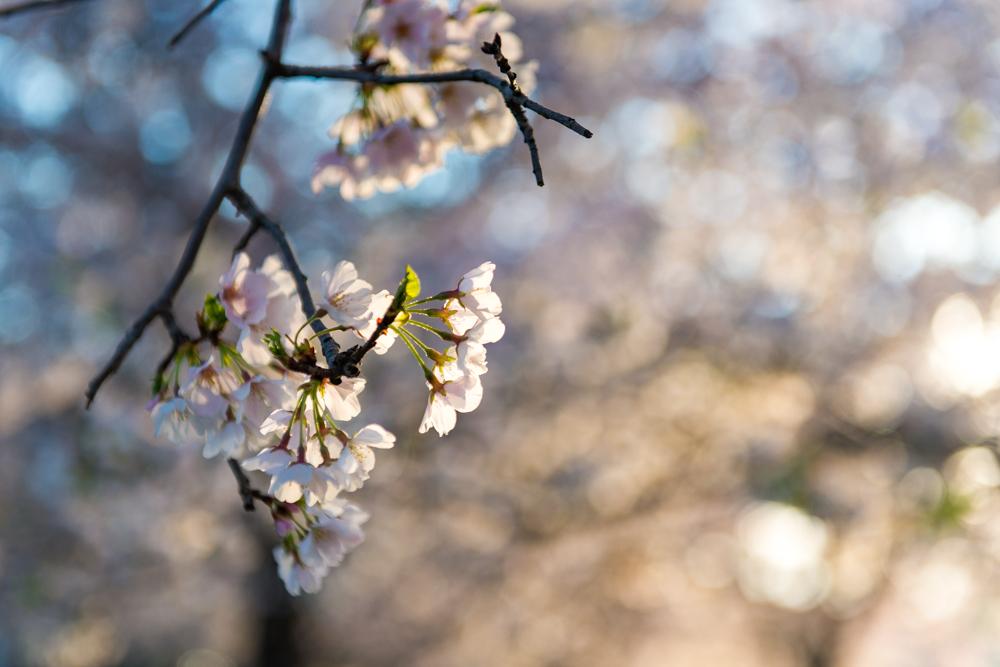 Spring Time in DC-459.jpg