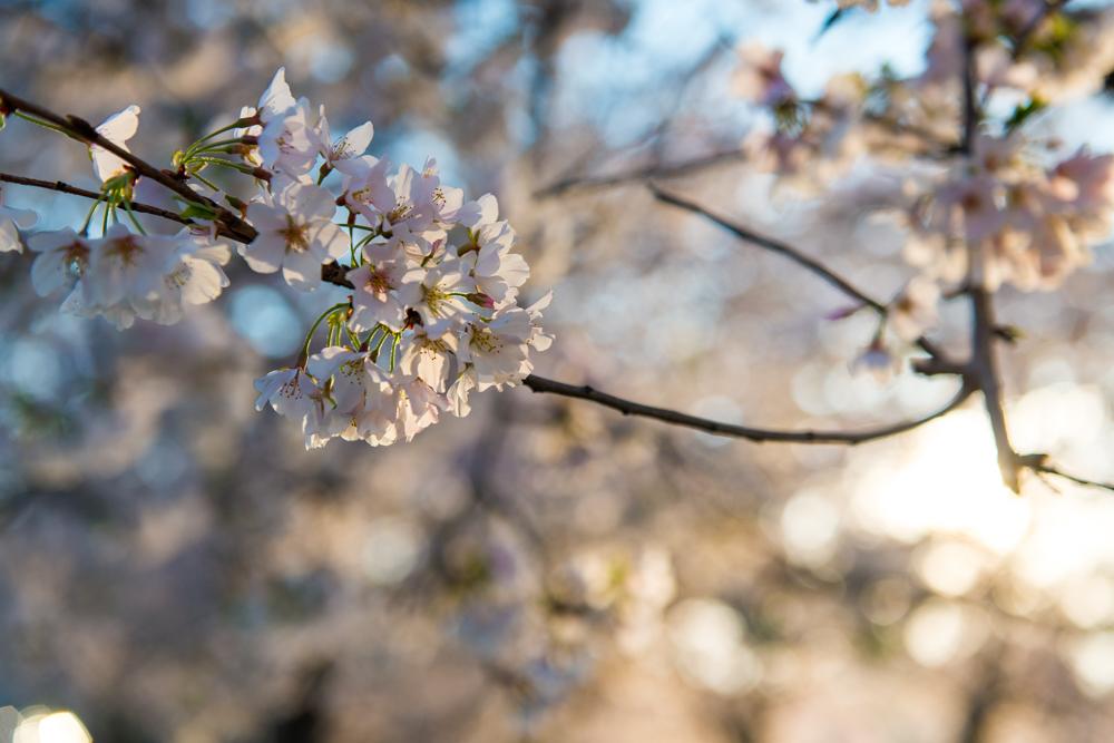 Spring Time in DC-457.jpg