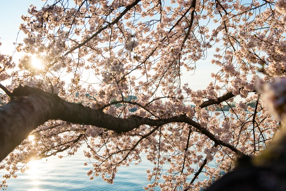 Spring Time in DC-447.jpg