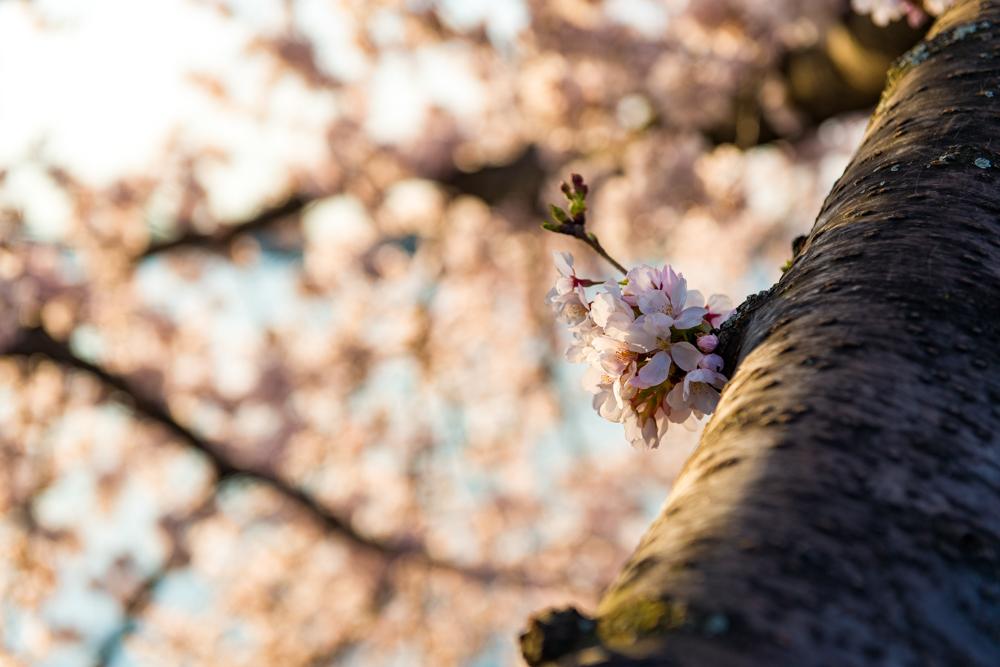Spring Time in DC-443.jpg