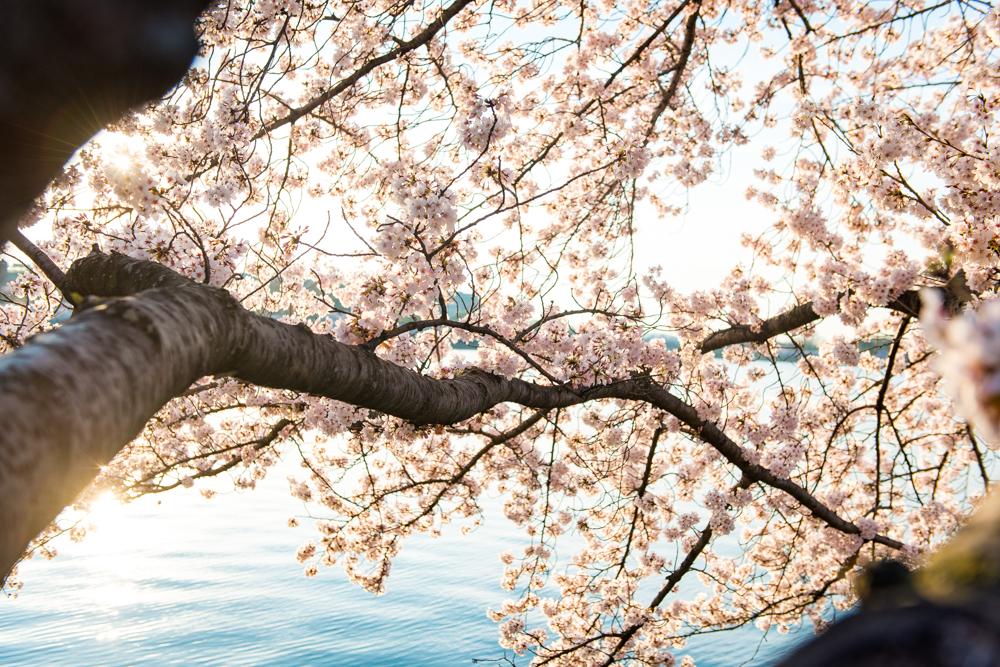 Spring Time in DC-445.jpg