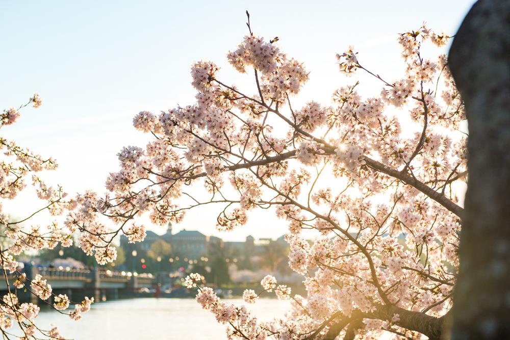 Spring Time in DC-439.jpg