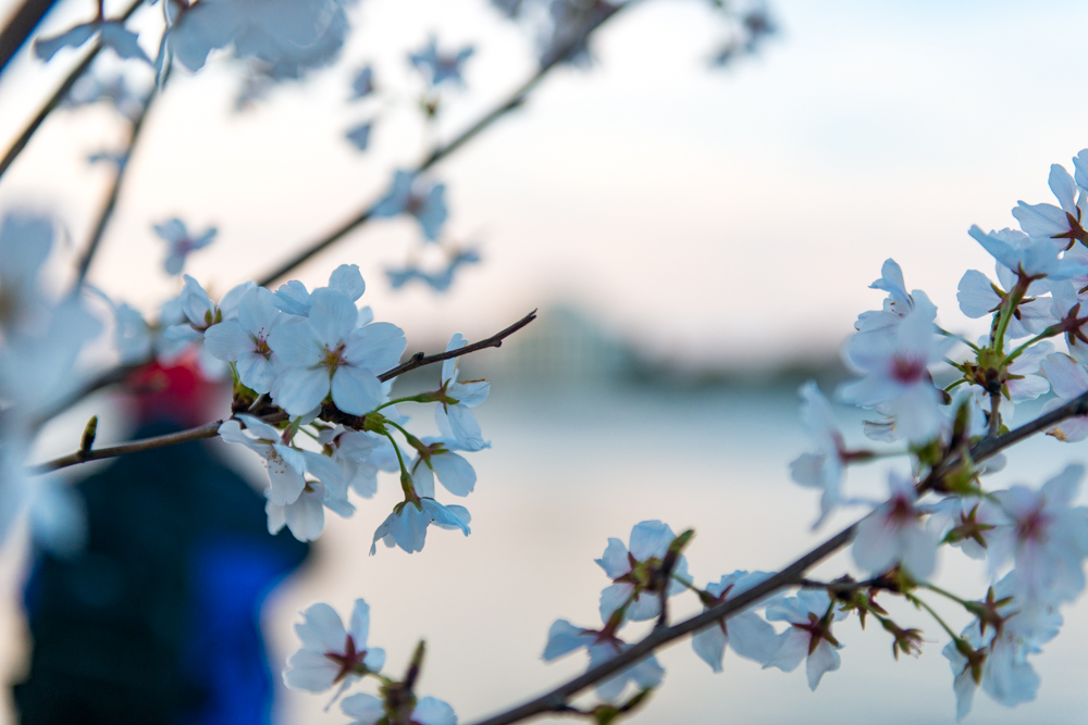Spring Time in DC-364.jpg