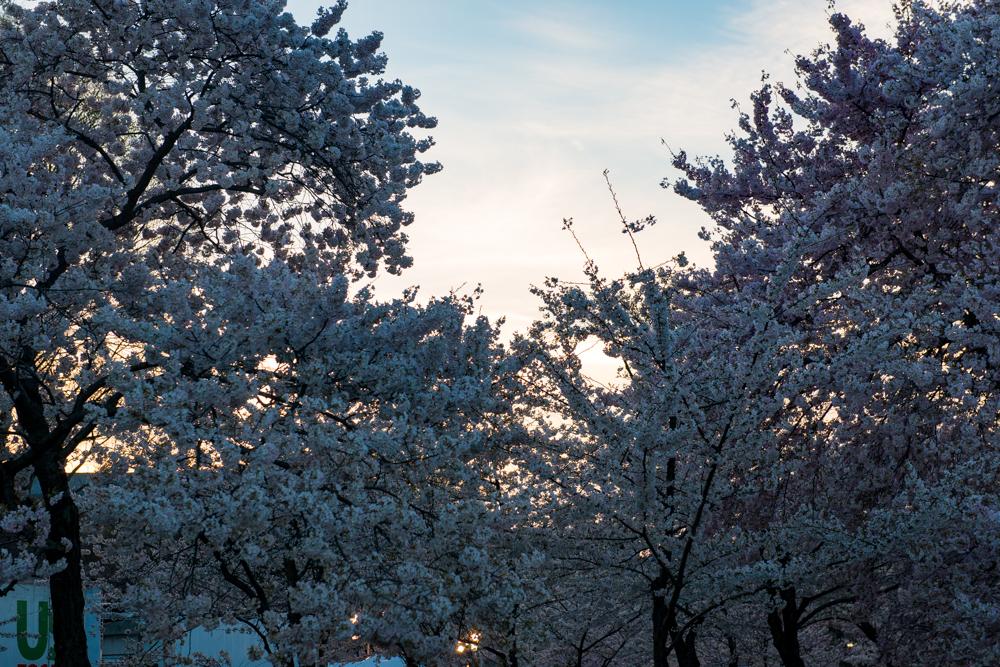 Spring Time in DC-349.jpg