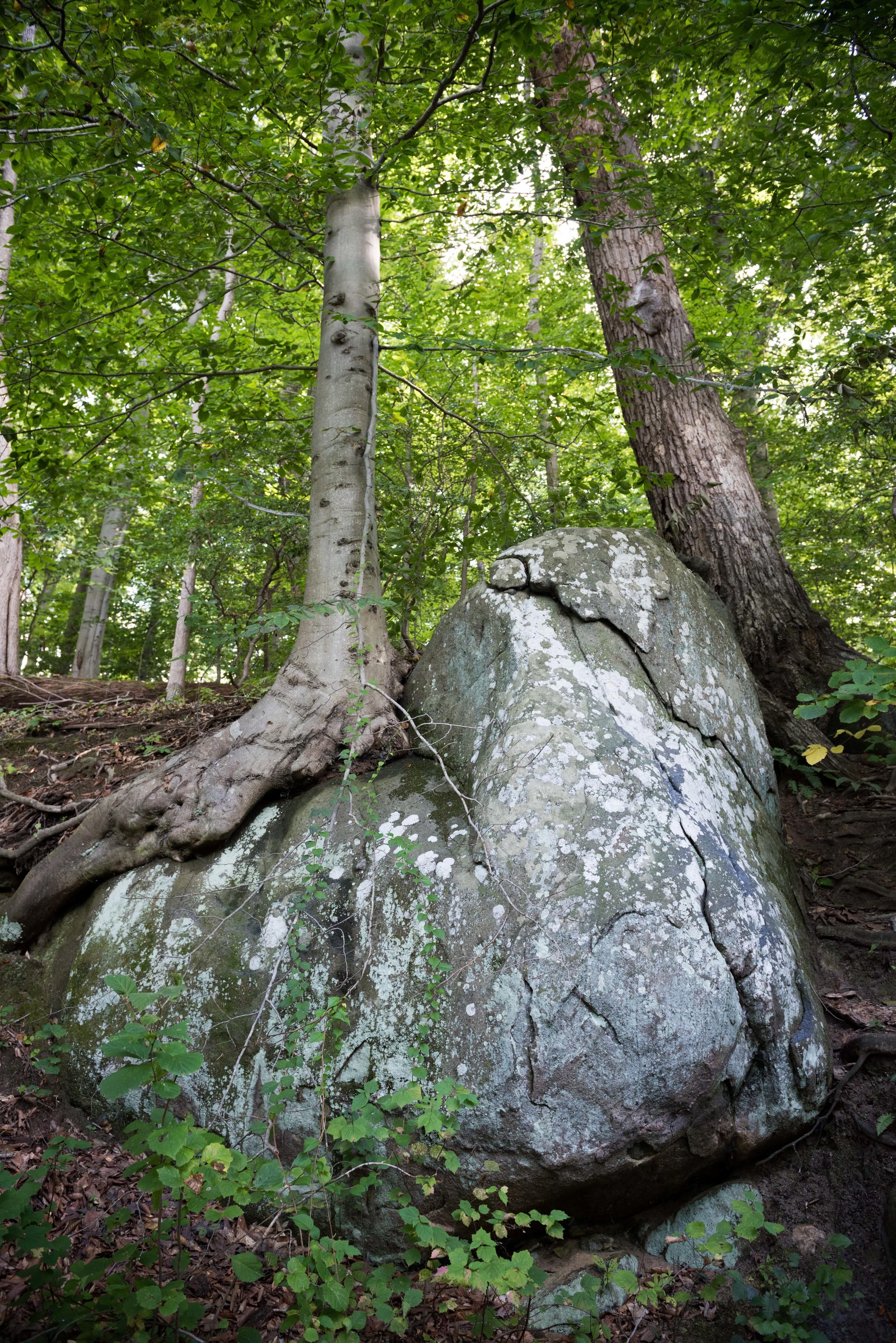 rock-creek-park-washington-dc-2