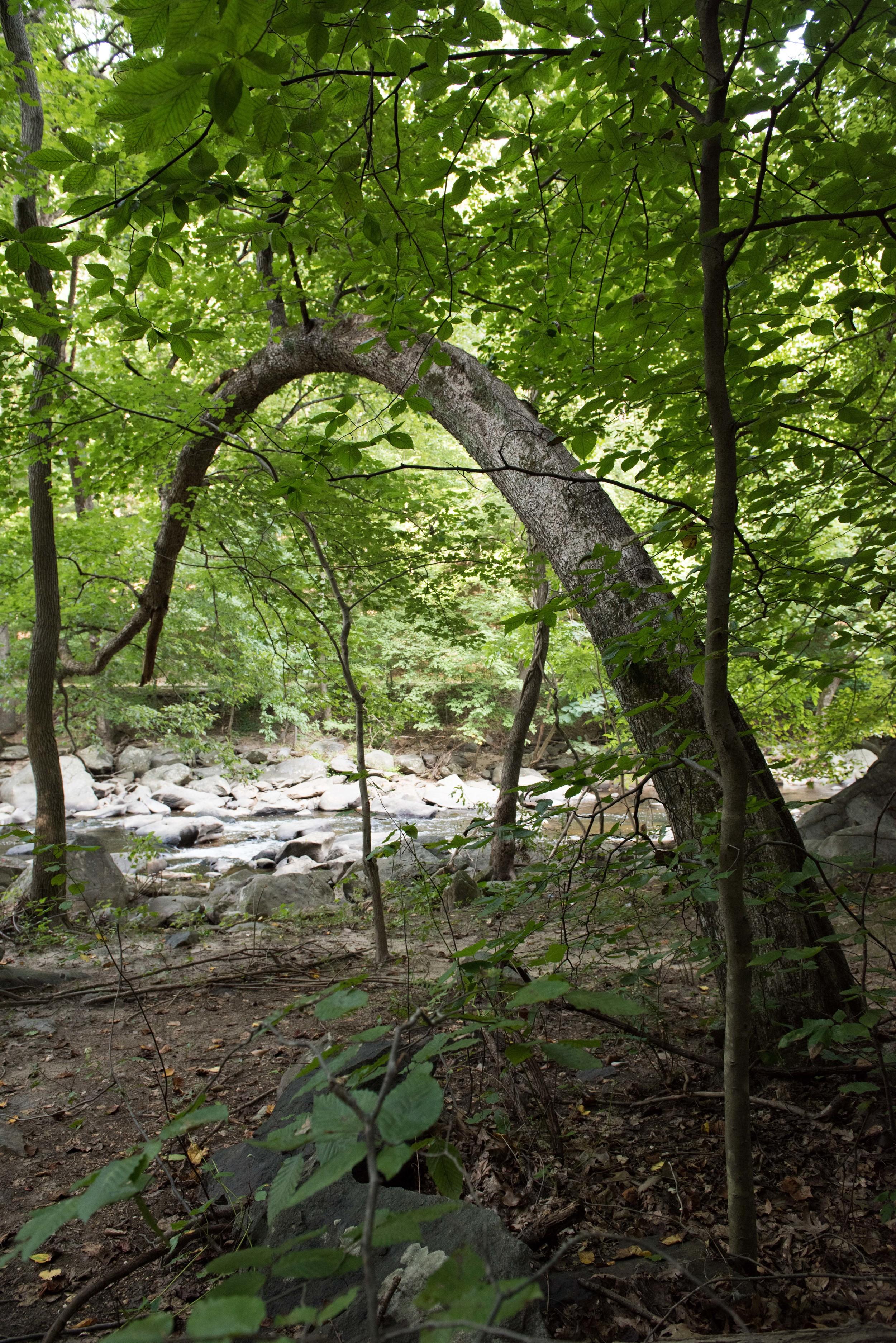 rock-creek-park-washington-dc-5