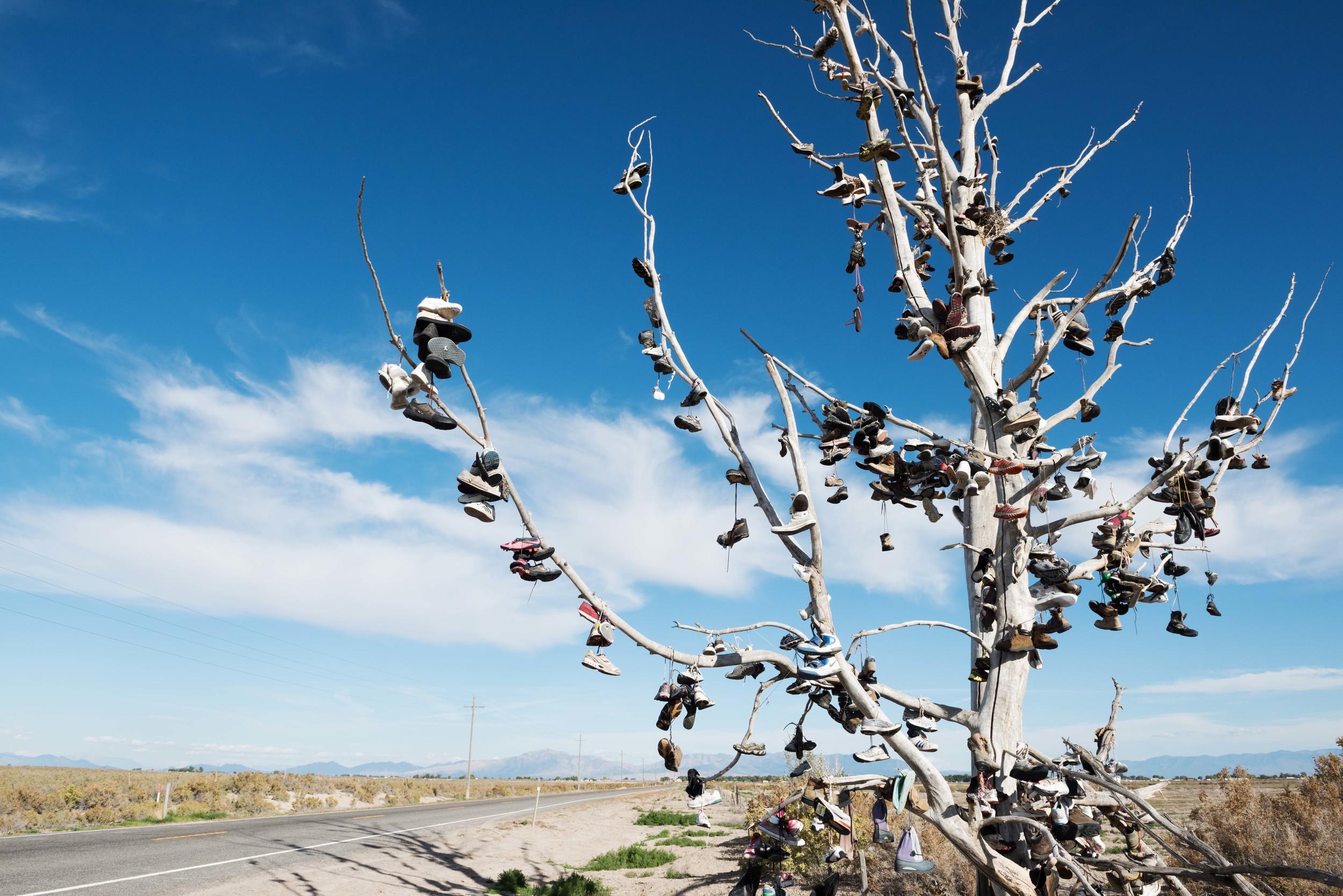 Shoe-Tree-Utah-2