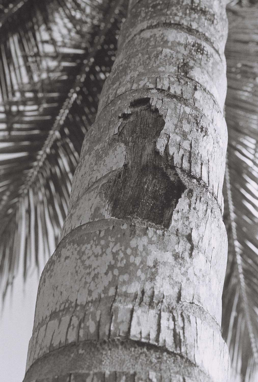 palm-dominican-republic-1
