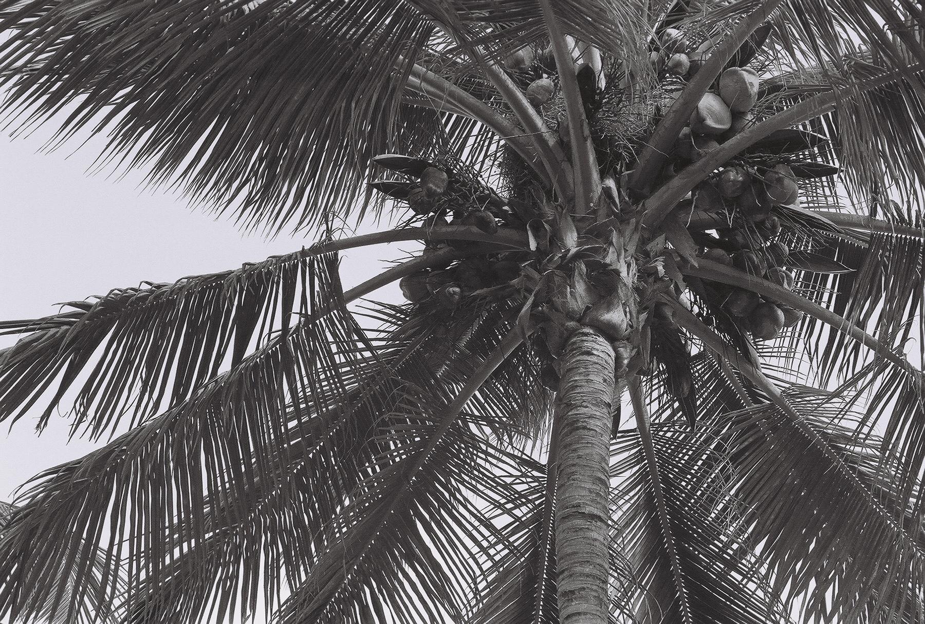 palm-dominican-republic-2