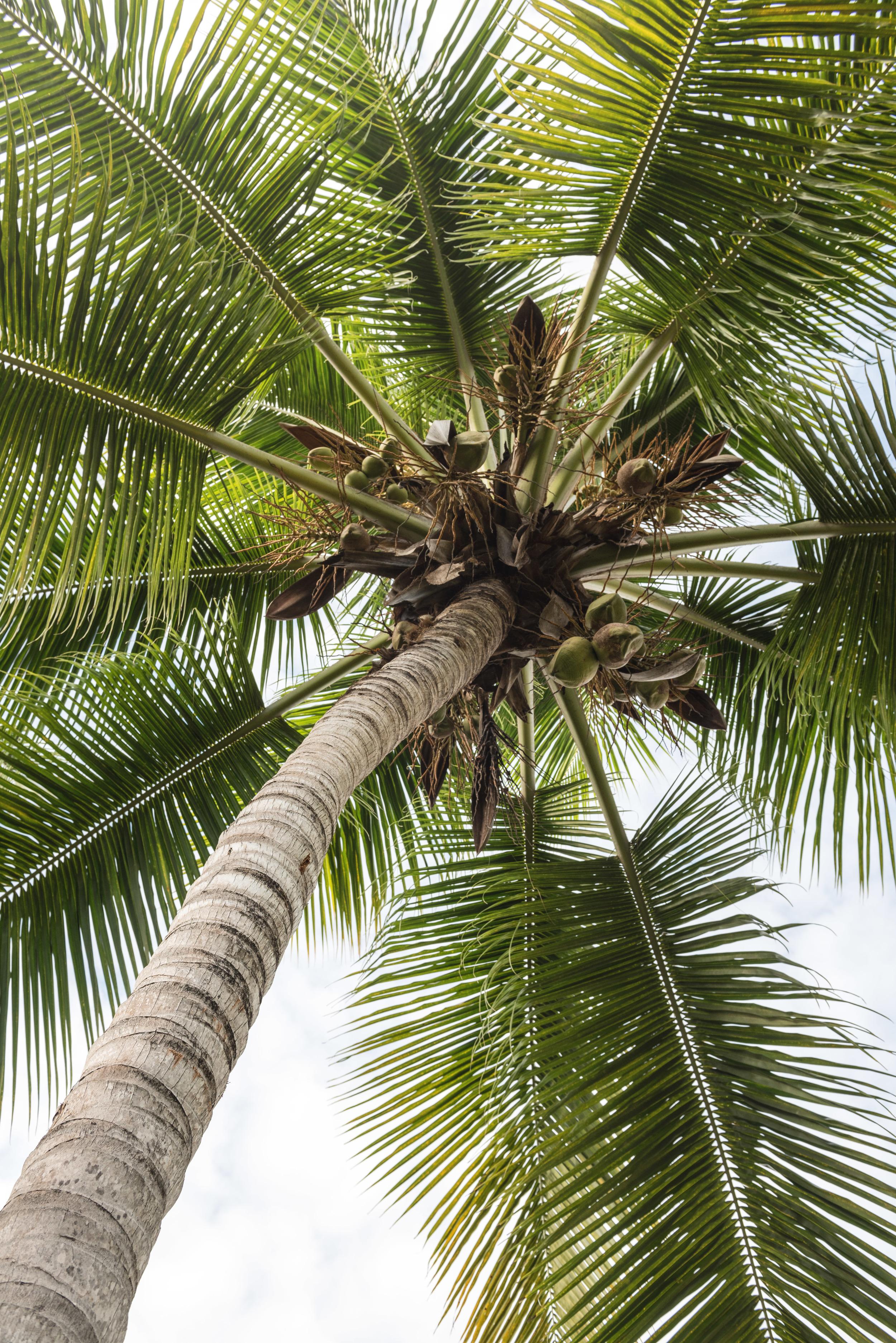 dr-casa-palm-2