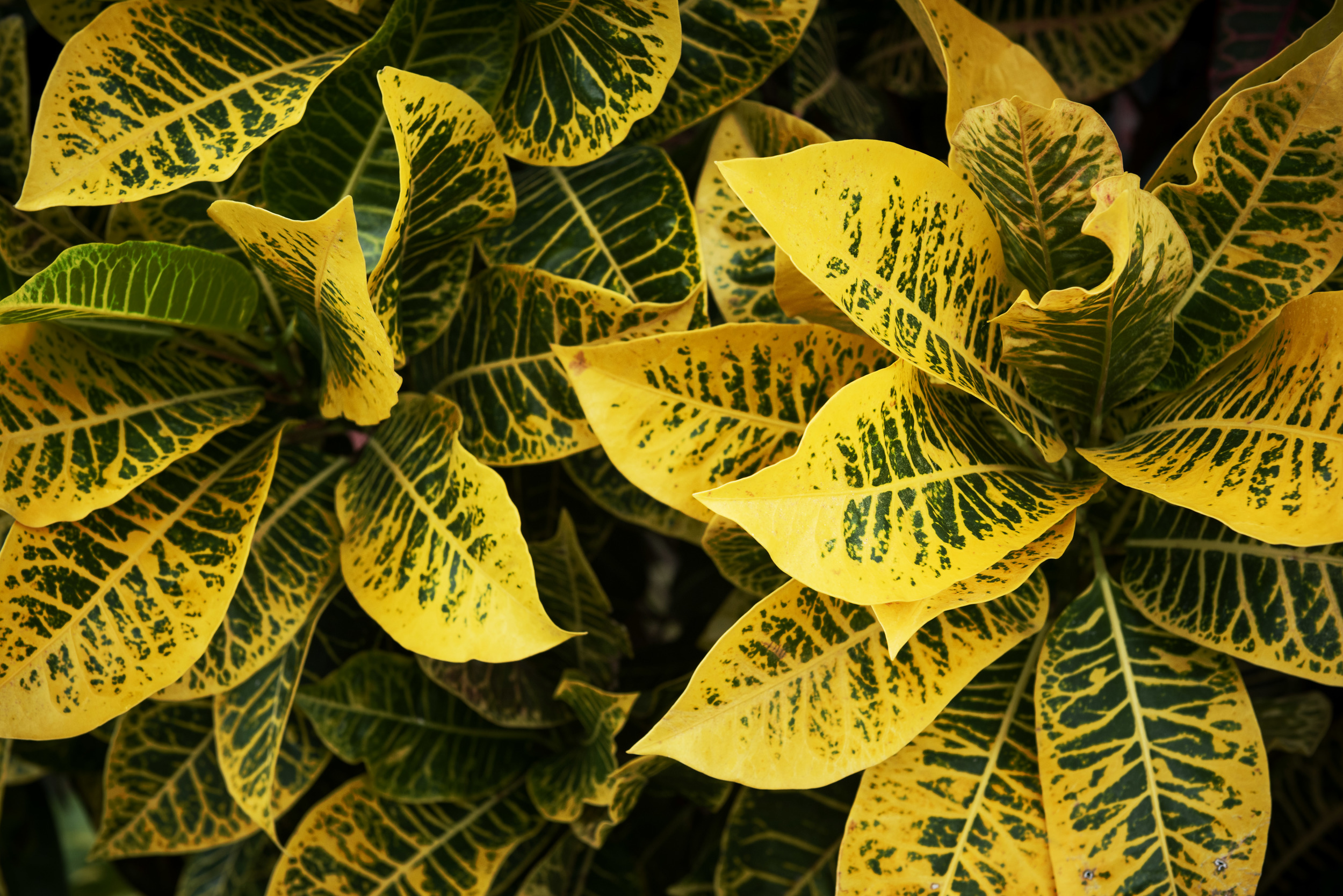 dr-yellow-flower