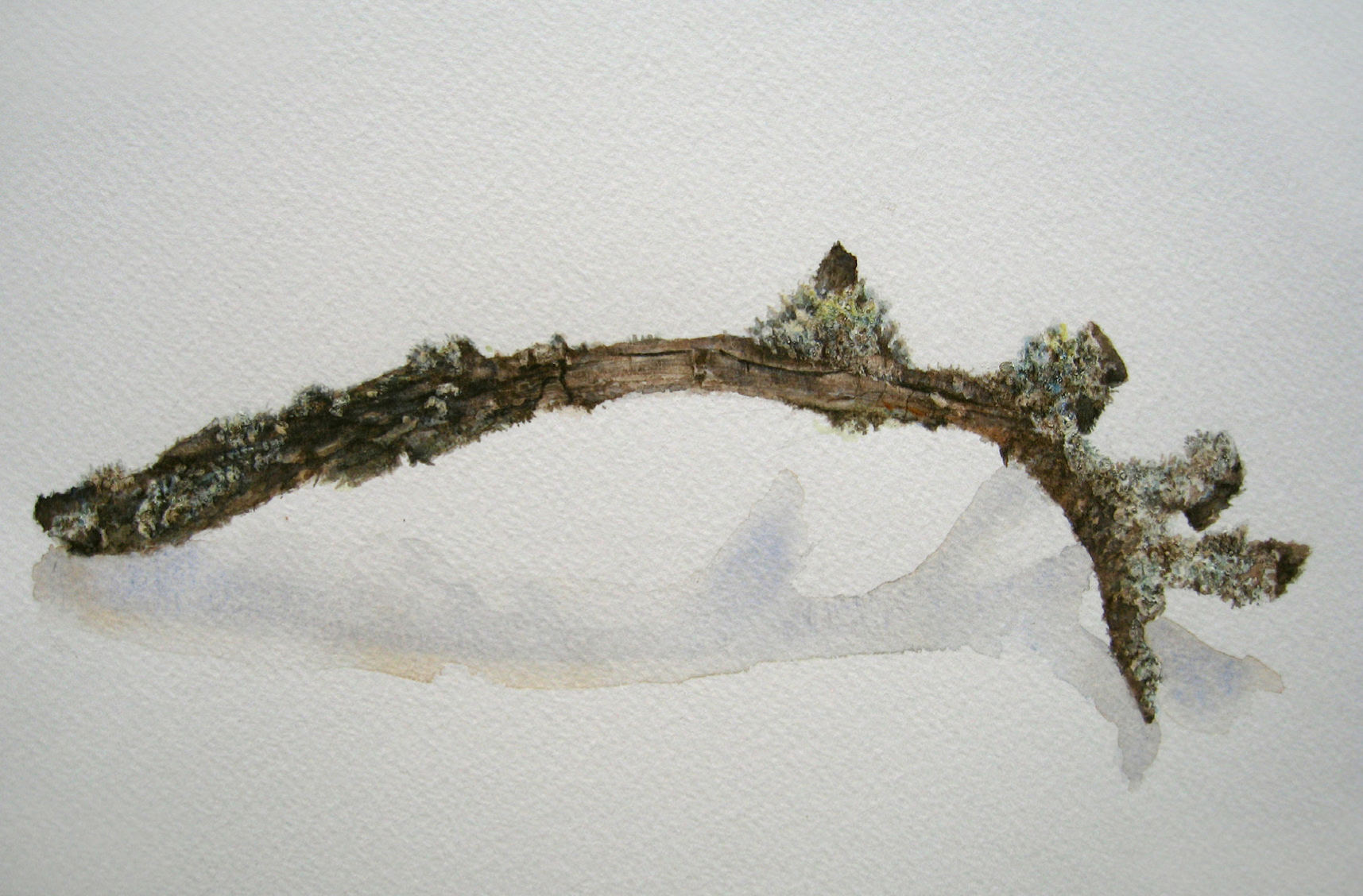 Study of a Twig