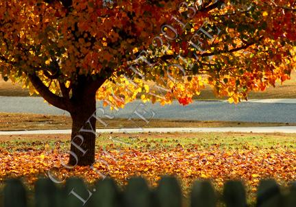 Soft Glow of Autumn