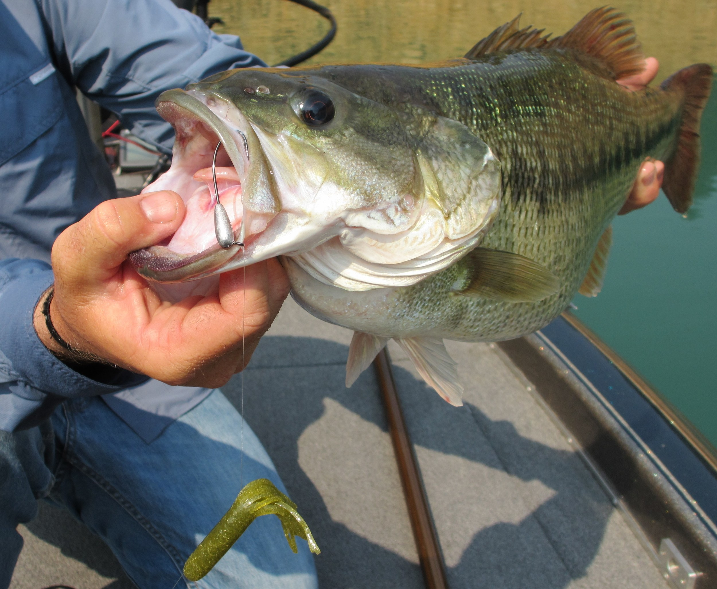 """This """"Old Ugly"""" tube slid up the line exposing the jig hook in this bass' mouth"""