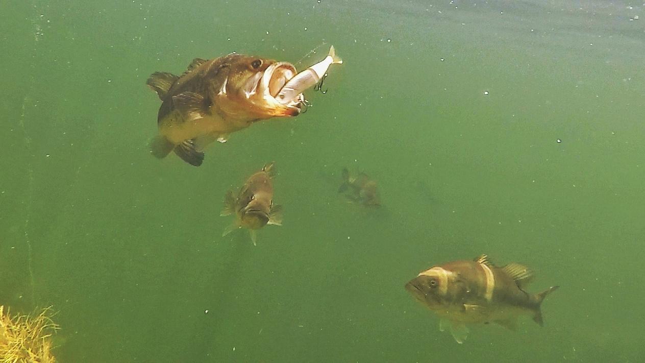 Underwater-02.jpeg