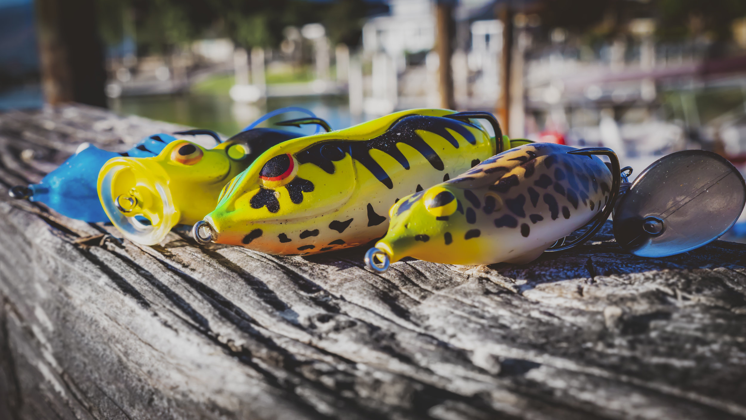 everything-you-need-to-know-summer-frog-fishing