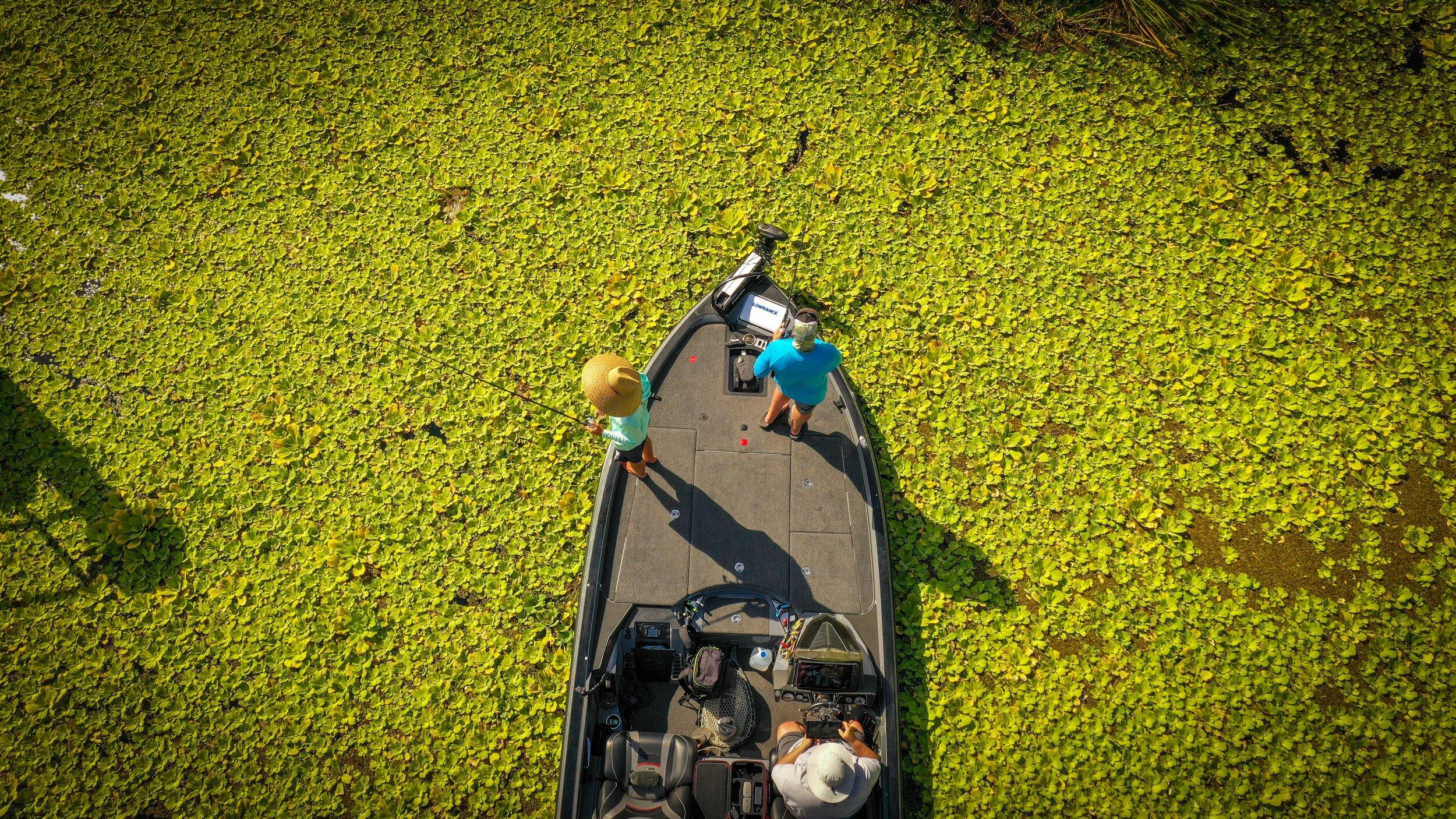 Everglades web.jpg