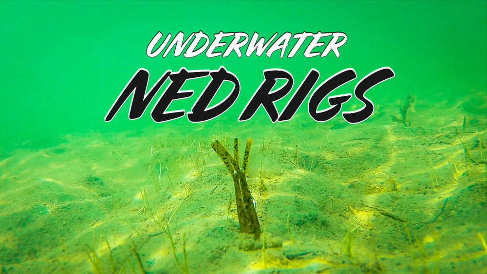 Underwater Footage of 9 NEW Ned Rig Baits | Which Ones Work The Best?